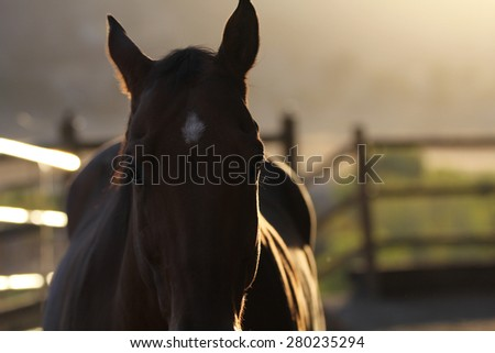 A silhouette view of a horse in a paddock. - stock photo