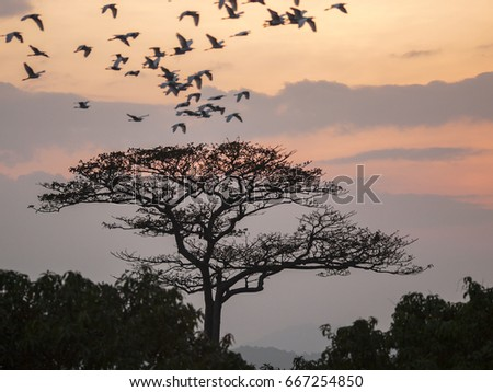 A silhouetted tree at sunset in the Thai countryside as birds fly to roost for the evening.