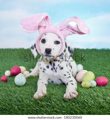 A silly Dalmatian puppy wearing bunny ears laying in the grass with Easter eggs around her. - stock photo