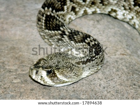 A silver snake crawling on the ground