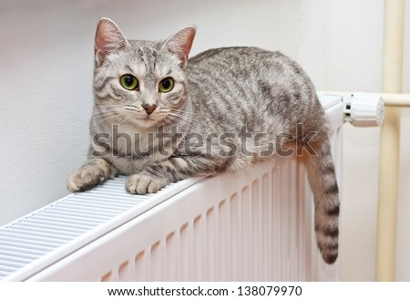 A silver tiger (tabby) cat relaxing on a warm radiator - stock photo