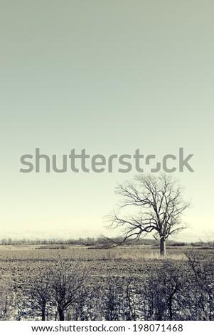 A single barren tree in an open field. - stock photo