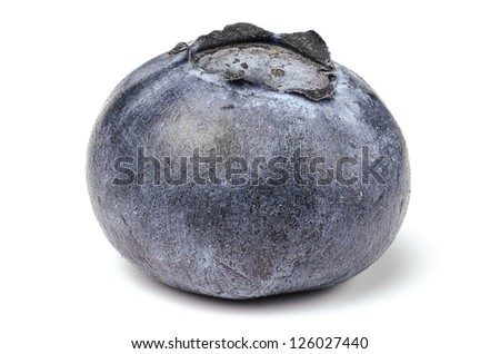 A single blueberry over white seamless background - stock photo