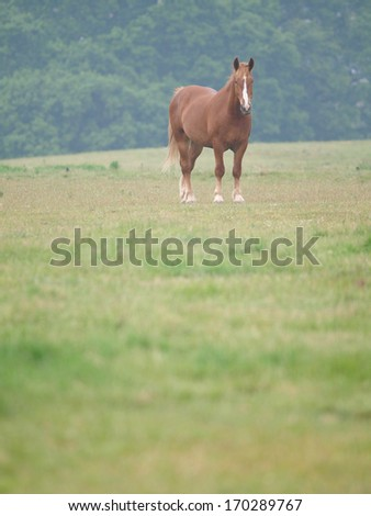 A single chestnut horse stands alone in a grass filled paddock.