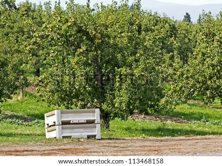 A single commercial fruit packing crate sitting in an orchard under a tree.