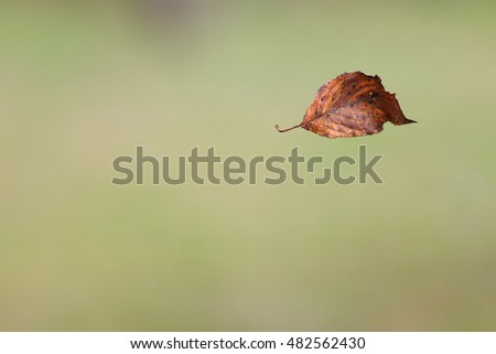A single dry leaf floating in the air in front of a smooth blurred green background.