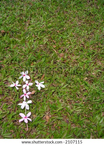 A single flower cross against a patch of green grass - good for copyspace wordings