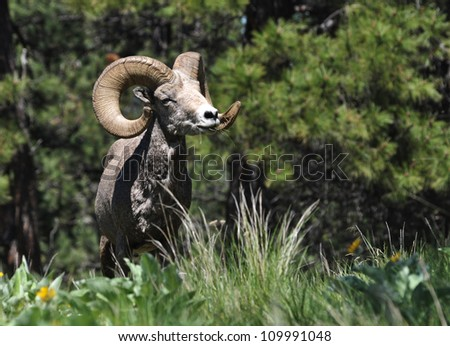 bighorn asian singles You can travel for as low as $77 per day with cosmos turn your travel dreams into reality with an affordable cosmos tour book your vacation with us.