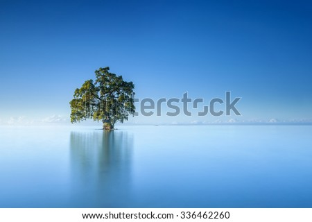 A single lonely tree in a blue sky morning in the middle of beautiful Lahad Datu beach, Sabah Borneo Malaysia - stock photo