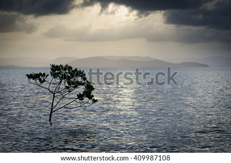 A single mangrove branch protruding from the water surface against a dramatic evening sky - stock photo