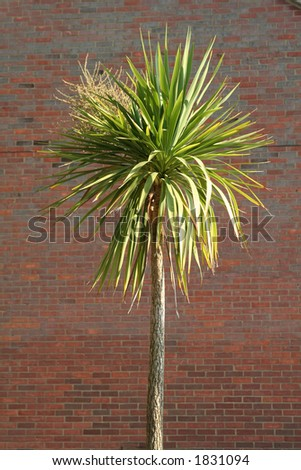 A single palm tree against a brick background