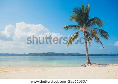 A single palm tree on a beautiful tropical beach with white sand