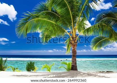 A single palm tree overlooking tropical beach on Rarotonga, Cook Islands - stock photo