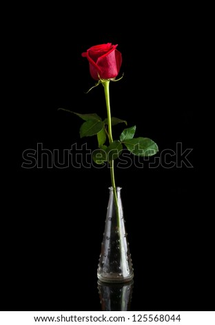 A single red rose in a vase, isolated against a black background - stock photo