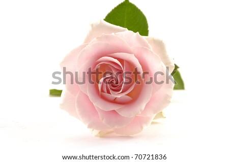 A single romantic pink rose - stock photo