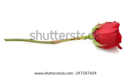 A single rose gift. - stock photo