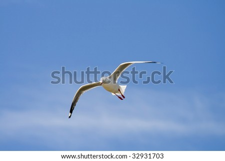 A single seagull flys in front of a blue sky