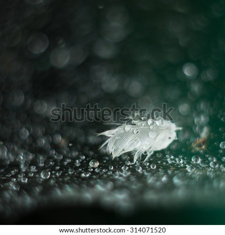 A Single Soft Wet Feather. Droplets on spider web. Selective focus. - stock photo