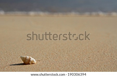 A single, spiral sea shell on a tropical beach, with gentle waves close to the shell - stock photo