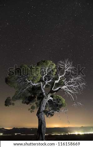 A single tree in a natural park under the stars