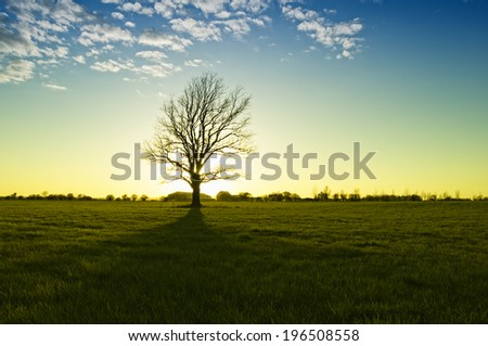 A single tree is in a field and the sun is rising. - stock photo
