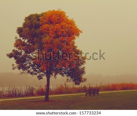 A single tree standing alone with the bench - stock photo