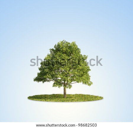 A single tree standing in a patch of grass