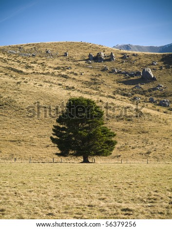 A single tree stands lush and green on a dry, barren hillside