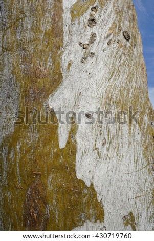 a single tree trunk with patterned bark - stock photo