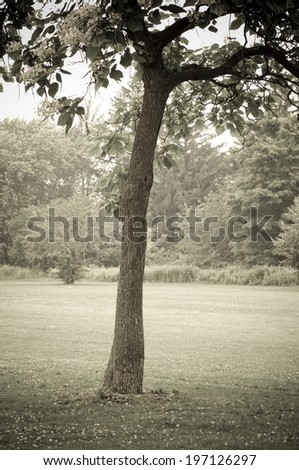 A single tree with a forest in the background.