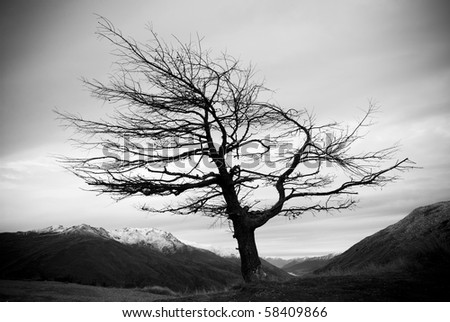 A single weathered tree stands without leaves on a mountain ridge