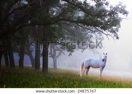 A single white horse standing in a beautiful foggy  woods. - stock photo