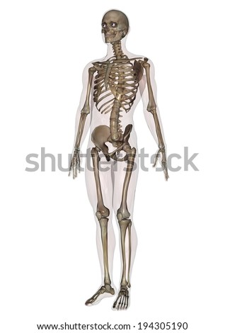 A skeleton with spooky eyeballs and some teeth. - stock photo