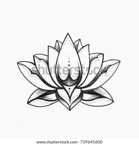 Sketch beautiful black white lotus flower stock illustration a sketch of a beautiful black and white lotus flower on a white background mightylinksfo