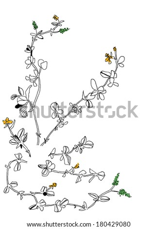 a sketch of meadow herbs - stock photo