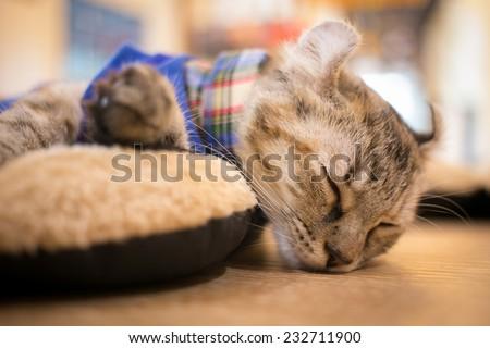 A sleeping cat  - stock photo