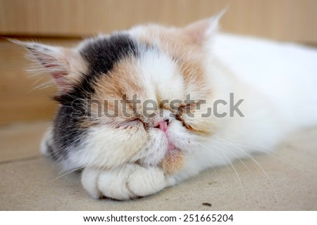 A sleeping cat