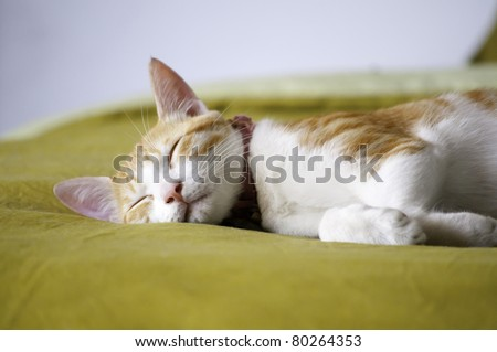 A sleeping cat - stock photo
