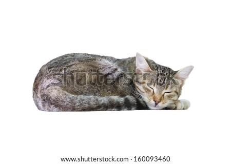 картинки кошек спящих