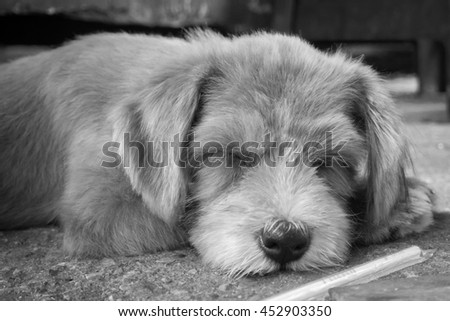 A sleeping half brown and orange hair color dog on cement floor with a plastic straw at the front (black and white photo style) - stock photo