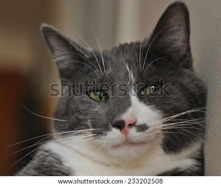 A sleepy cat looks dubious - stock photo