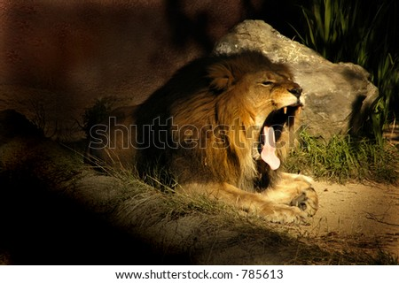 A sleepy lion yawing near his den. - stock photo