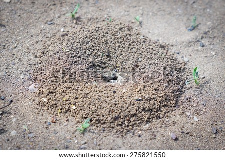 A small ant on the ground - stock photo