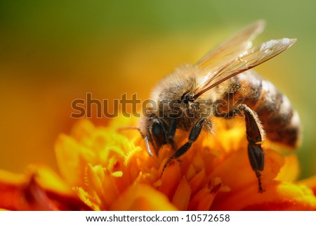 A small bee on the yellow flower