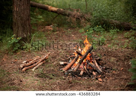 A small bonfire in a forest - stock photo