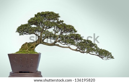 A small bonsai tree in a ceramic pot. - stock photo