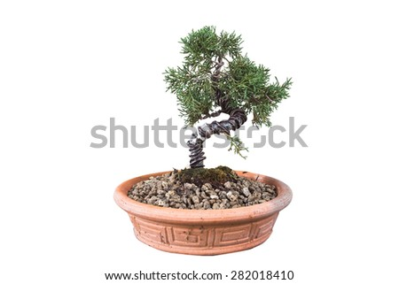 A small bonsai tree isolate on white background clipping path - stock photo