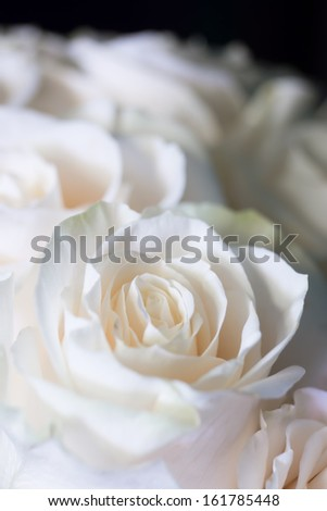 A small bouquet of light pink roses on a black background
