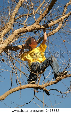 A small boy balances up in a  tree - stock photo