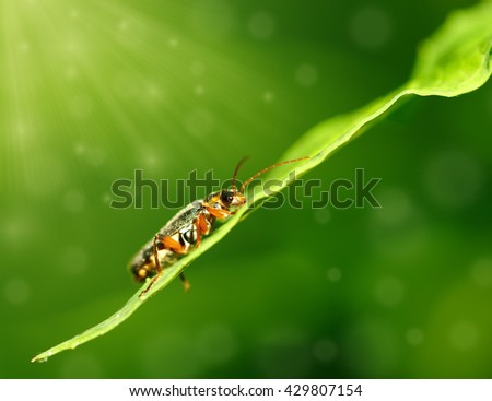 A small bug in the sun - stock photo